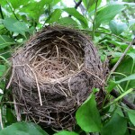 Empty nest Photo by Kristine Paulus